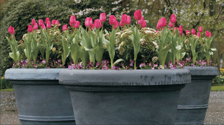 Design Themes - Cool Mini Gardens, bulbs in pots